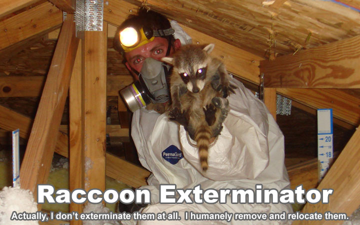 Pest Control For Raccoons